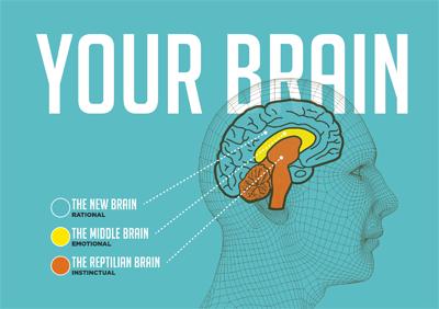 3-brain-neurozhin