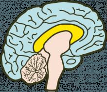 middle-brain-e1375808493448