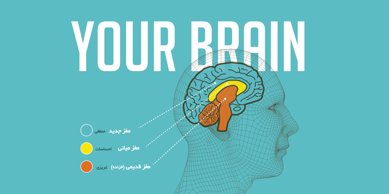 neurozhin-3-brains-banner