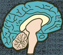 new-brain-e1375808475900