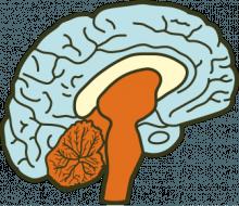 reptilian-brain-e1375808508161